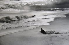 Elliott Erwitt Dogs | BUT BREAK MY HEART ..: Elliott Erwitt + Dogs =