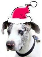 """'Thank You Santa!' from the Homeless Dogs at Rescue, 2012."" Please read our letter at http://hhdane.org/howtohelp/thankyou_santa_12.htm"