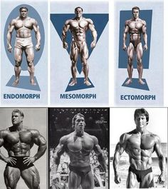 Body Types   SimplyShredded.com - Body Building Forum   Page 1