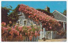 Postcards - United States # 378 - Rose Covered Cottage, Siasconset, Massachusetts