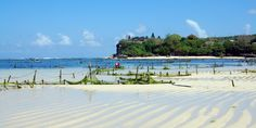 Harvesting seaweed on the Bukit - by Nusa Dua Beach and Grill