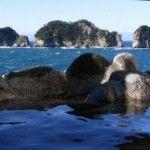 Izu Izu Izu, #Japan – #Travel Guide http://tourtellus.com/2012/08/izu-japan-travel-guide/