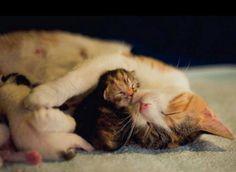 OMG! I'm dying of cuteness overload!