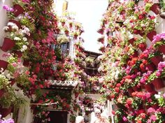 Come to Cordoba, the City of Flowers in Spain!
