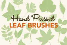 Pressed Leaves Photoshop Brushes by Gemma Garner on Creative Market