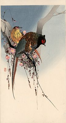 Ohara Koson  A pair of green pheasants (Phasanius versicolor, jap. Kiji) on weeping cherry