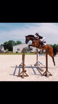 Big Horses, Funny Horses, Cute Horses, Pretty Horses, Horse Love, Show Horses, Horses Jumping Videos, Horse Videos, Horse Photos