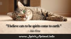 "Inspirational Cat Quotes ""As anyone who has ever been around a cat for any length of time well knows cats have enormous patience with the limitations of the human kind. Inspirational Cat Quotes, Cat Spirit Animal, Animals Information, Cheap Carpet Runners, Animal Totems, How To Clean Carpet, Spring Cleaning, Cat Memes, Cats And Kittens"