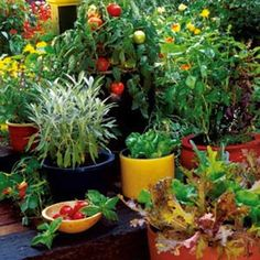 Grow Your Own Container Gardens - Organic Gardening - MOTHER EARTH NEWS