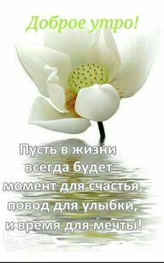 Morning Greeting, Amazing Flowers, Texts, Place Card Holders, Words, Quotes, Anna, Coffee, Live