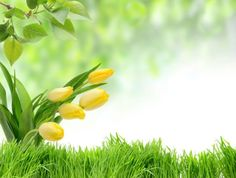 Hd flower pictures free stock photos download (13,004 Free stock ...