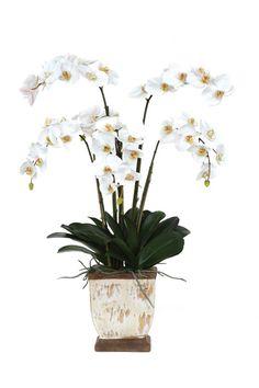 Beautiful Lg Phal Pot Silk Flower Arrangement.  Free Shipping. Faux Flowers, Silk Flowers, Faux Flower Arrangements, Orchids, Free Shipping, Plants, Beautiful, Fake Flowers, Plant