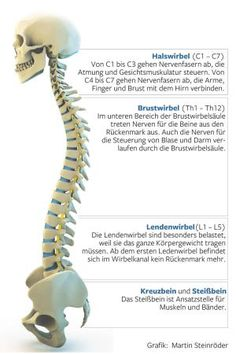 Nerve irritation: when sciatica turns every movement into agony .-Nervenreizung : Wenn der Ischias jede Bewegung zur Qual macht – WELT This is how the spine is constructed - Fitness Tips, Health Fitness, Workout Fitness, Fit Women Bodies, Medical Anatomy, Insanity Workout, Acupressure, Health Articles, Health Motivation