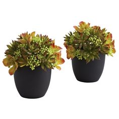 Mixed Succulent w/Black Planter (Set of 2).  Mixed Succulents are so pretty, aren't they? It's not just the colors - it's the shapes, the textures, and the way their look personifies their name. We've taken the best of the best for this arrangement, and placed them in a  beautiful black planter. Best of all, we'll double your enjoyment by making this a set of two. Ideal for home, office, or even as a thoughtful (if eclectic) gift. #succulents #silkplants