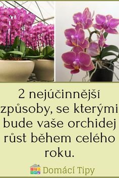 Geraniums, Container Gardening, Orchids, Winter, Tips, Flowers, Plants, Macrame, Beautiful