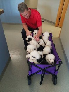 Kirby's Sheepies puppies