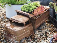 Old toy truck and succulents.