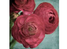 Red Ranunculus Print, Floral Wall Art,  Flower Photography, Floral Art Print, Flower Art, Modern Decor
