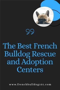 Learn all about the best french bulldog rescue and adoption centers. This post has all you need when it comes to choosing the right center to adopt a French Bullddog. French Bulldogs are in need of good homes and tis list will help you to choose the right adoption center for you. French Bulldog Rescue, French Bulldog Facts, French Bulldogs, Adoption Center, Snuggles, Homes, Pets, Blog, Houses