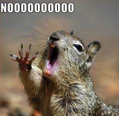 Nooooooooooo! @Michael Pequeno