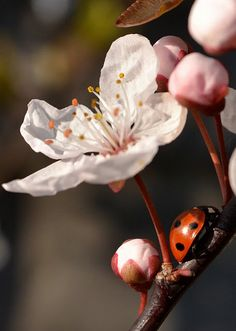 I used to collect ladybugs all the time when I was little. Beautiful pic!
