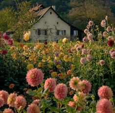 Farmhouse Garden, Garden Cottage, Cottage House, Cozy Cottage, Beautiful Gardens, Beautiful Flowers, Beautiful Places, Nature Aesthetic, Aesthetic Light