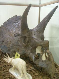 Museum of Geology - South Dakota #kids #dinosaurs