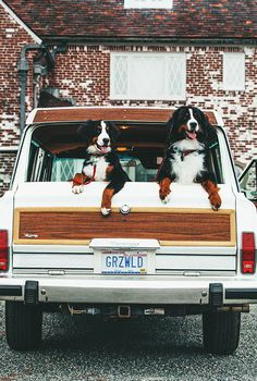 Two of my favorite things...mountain dogs and hatchbacks. <3