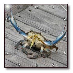 Special Offers - 3dRose dpp_63150_3 Blue Crab-Marine Creature Animal Animals Wildlife Ocean Invertebrate Crab Seafood-Wall Clock 15 by 15-Inch - In stock & Free Shipping. You can save more money! Check It (August 01 2016 at 10:05AM) >> http://wallclockusa.net/3drose-dpp_63150_3-blue-crab-marine-creature-animal-animals-wildlife-ocean-invertebrate-crab-seafood-wall-clock-15-by-15-inch/