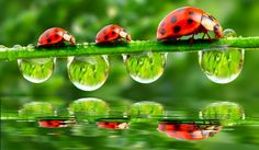 Three Bugs With Green Umbrellas HD Insects Fun Wallpaper Sacred Spirit, Photo Coccinelle, Photo Lovers, Fotografia Macro, Tier Fotos, Cool Wallpaper, Adhesive Wallpaper, Desktop Wallpapers, Photo Wallpaper