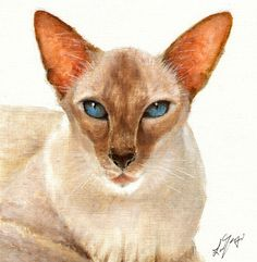 Original Oil Portrait Painting SIAMESE CAT Artwork by ninistores, $80.00