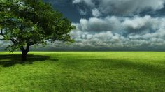 3D Nature Tree Wallpapers