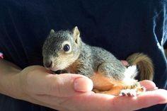 hooray, tiny animals!
