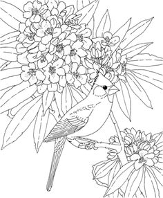 click to see printable version of cardinal and rhododendron west virginia bird and flower coloring page