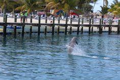 Dolphin Encounters on Blue Lagoon Island