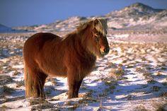 Fotos de Natureza: Cavalos