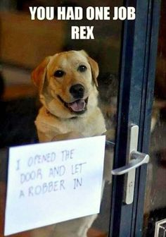 This Overly Delightful Door Gr is listed (or ranked) 16 on the list 40 of the Most Hilarious Dog Shaming Photos Ever Dog Shaming Pictures, Funny Dog Photos, Funny Animal Pictures, Animal Pics, Dog Quotes Funny, Funny Animal Memes, Funny Memes, Animal Funnies, Jokes