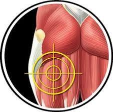 pelvic bridge muscle in motion - Recherche Google