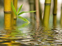 bamboo water - Google Search