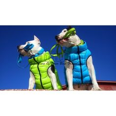 Things To Buy, Donald Duck, Disney Characters, Fictional Characters, Vest, Dogs, Doggies, Fantasy Characters, Dog