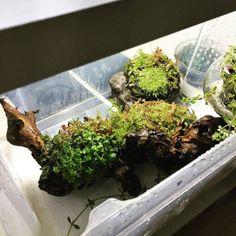 Simon's Aquascape Blog Diskus Aquarium, Hello To Myself, Cool Pictures, Flora, Rest, Aquascaping, Plants