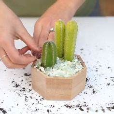 Community of succulents, cactus & plant lovers.