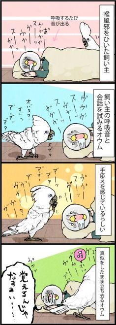 漫画「いたずらオウムの生活雑記」 (81) 風邪のモノマネ | ライフスタイル | マイナビニュース