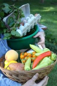 Hungarian Hot Wax peppers in a basket with other farm-fresh goodies. Jessica Walliser