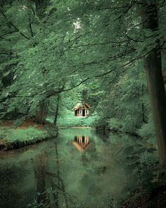 Little cabin in the woods I wouldn't mind living there it looks soooooo peaceful! Forest Cabin, Forest Path, Beautiful World, Beautiful Places, Another Green World, Mystical Forest, Cabins And Cottages, In The Tree, Cabins In The Woods