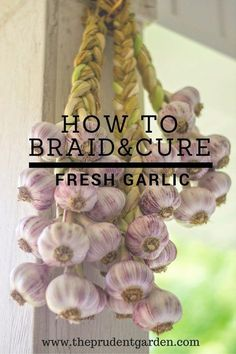 Growing Vegetables How to braid and cure fresh garlic - Check out this step-by-step photo tutorial and learn how you can turn your backyard garlic harvest into beautiful, convenient braids for curing or storage. Diy Garden, Edible Garden, Herb Garden, Garden Projects, Garden Ideas, Garden Soil, Glass Garden, Garden Landscaping, Homestead Gardens