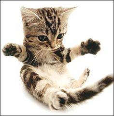 Dis yoga pose helps meez enter yer room quiet like...
