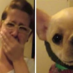 Woman Tells Pup that She Loves Her, But the Dogs Response Brings Her to Tears Animals Of The World, Animals And Pets, Funny Animals, Cute Animals, Funny Dog Memes, Funny Dogs, Puppy Obedience Training, Long Haired Dachshund, Pet News