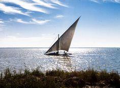 Lake Burullus , Kafr El -Sheikh Photo by / Fayed El-Geziry @fayedelgeziry  #lake #sea #sky #cloud #clouds #plants #sunny #sunrays #sunshine #sunsea #sunset #egypt #travel #travelphotography #photojournalism #photographer #picoftheday #photography #photooftheday #photojournalist #streetphotography #canon