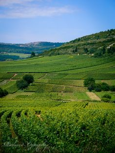 Photo Burgundy 2007 par Richard Ography on 500px